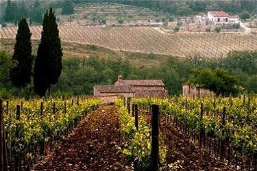 Tuscany Farm Holidays near Florence Holiday Farms in
