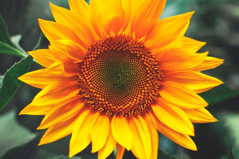 Galera de imgenes Las 15 flores ms bonitas