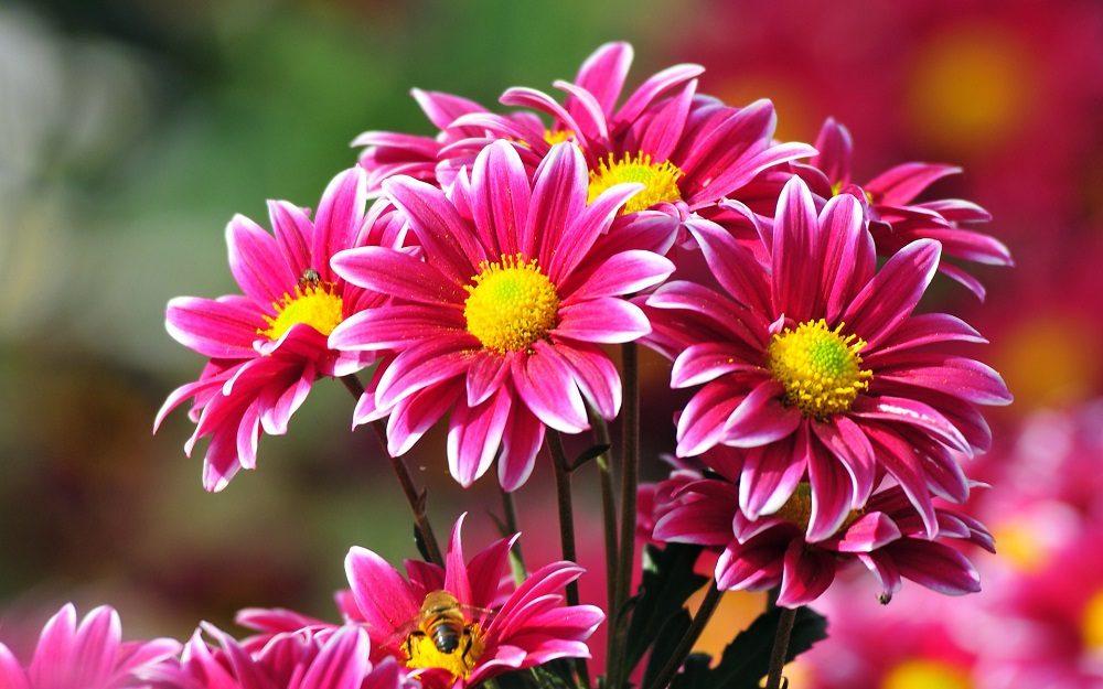 Flores bonitas  Imgenes y fotos