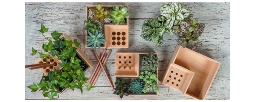 regalar plantas y tipos de macetas - florestore