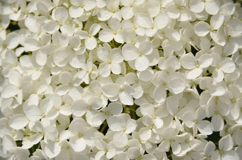 Flores blancas para nacimientos ideas - FloreStore