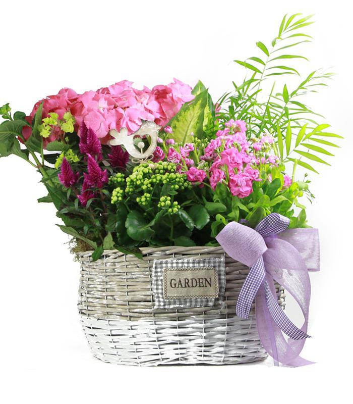Cesta de Plantas Día de la Madre