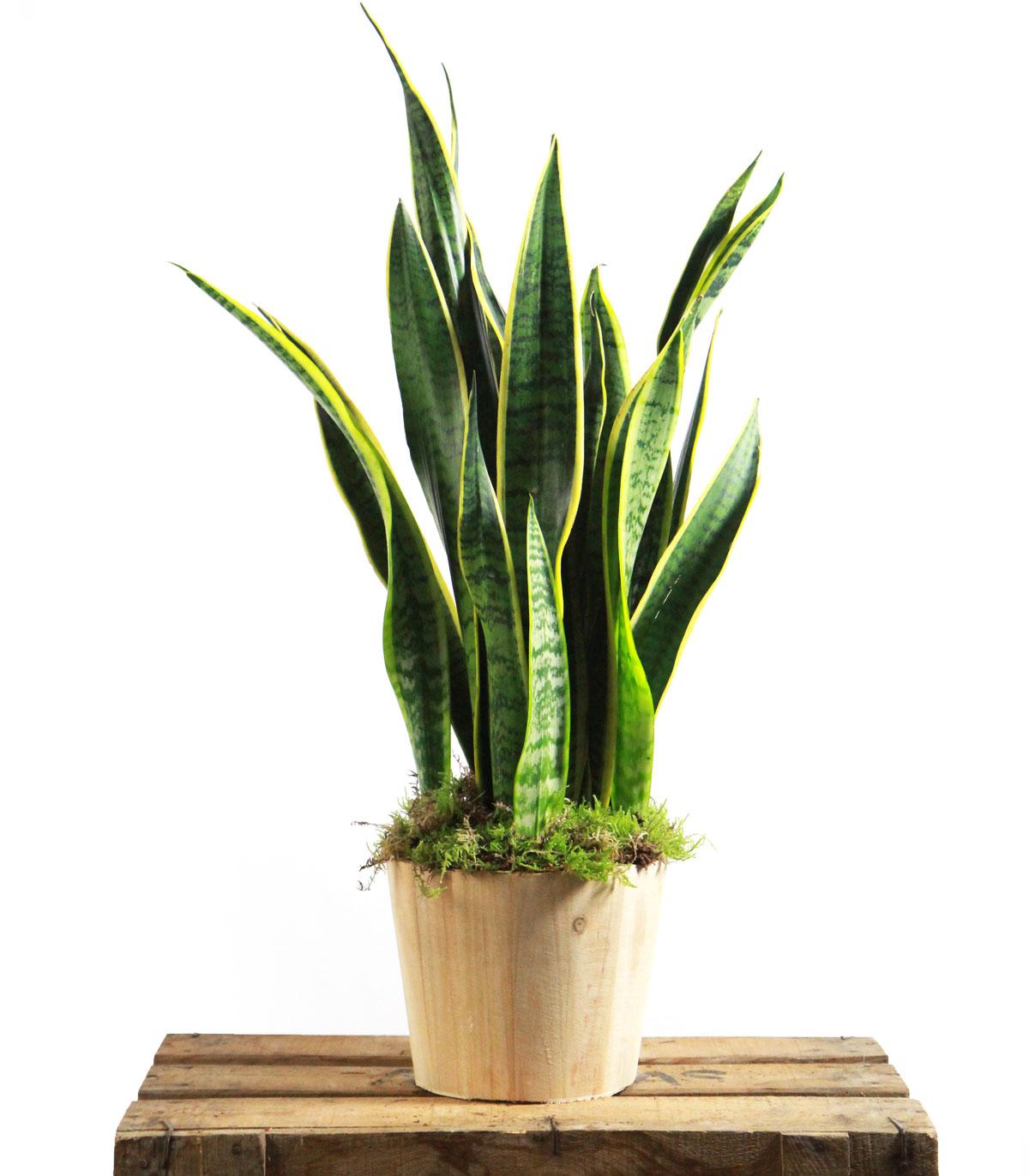 plantas a domicilio barcelona
