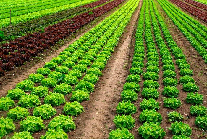 Huella isotópica en fertilizantes nitrogenados ecológicos ...