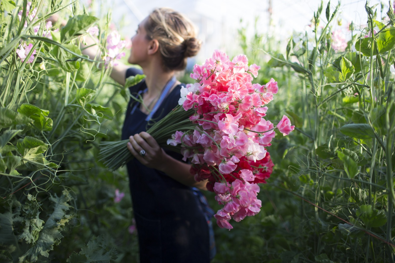 Spring Flower Farming Intensive Ii