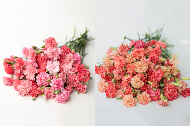 Carnation seed from Floret Flower Farm