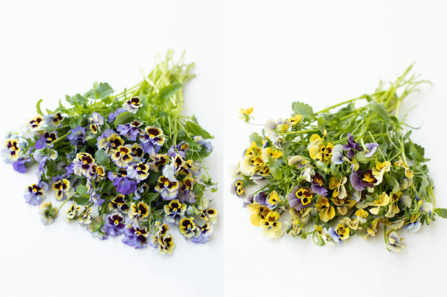 Pansies from Floret