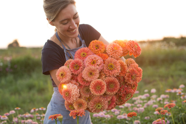 armload of salmon coral colored zinnias
