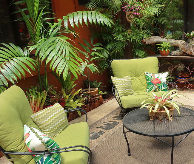 Picture of potted Flame Thrower Palm outside by the sitting area.