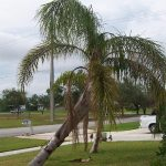HURRICANE RESISTANT TREES FOR YOUR FLORIDA LANDSCAPE
