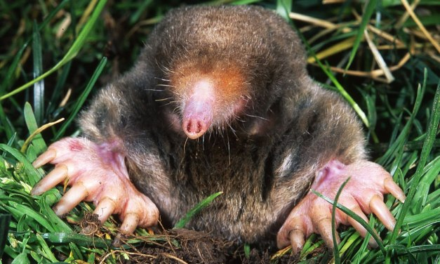 INTERVIEW WITH A MOLE