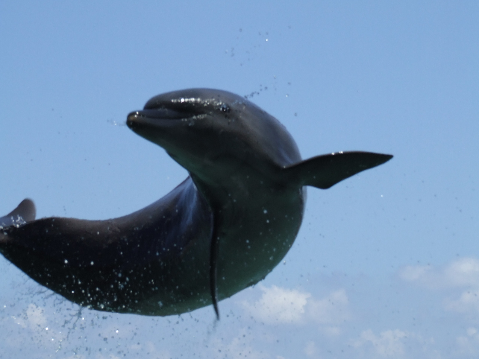 Florida Keys Swim With Dolphins Tour And Ticketgallawasp