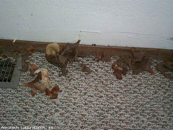 Moldy Carpet With Mushrooms