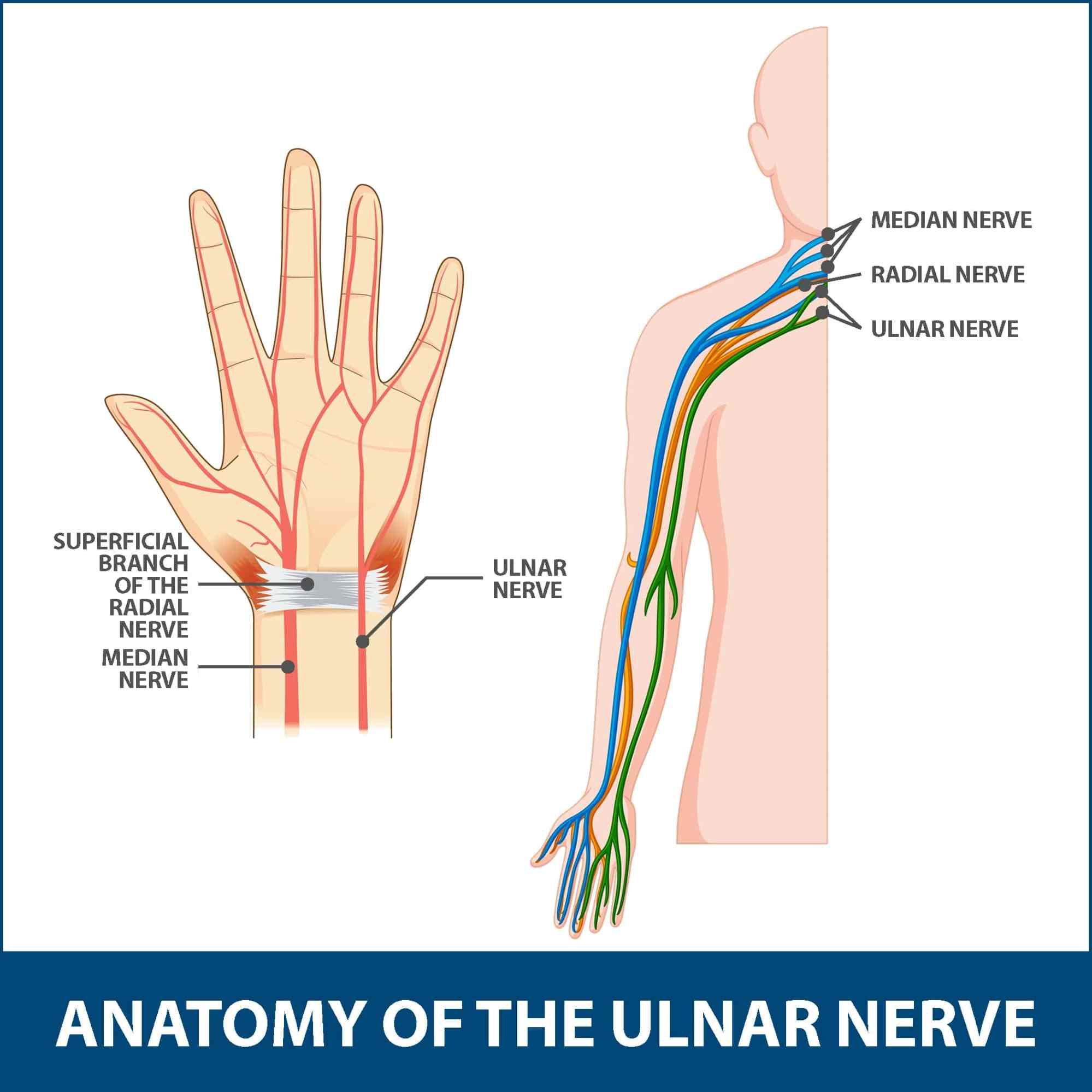 hight resolution of ulnar neuritis anatomy