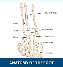 the mtp joint is the largest of the two and is found where the first long bone of the foot metatarsal meets the first bone of the toe phalanx  [ 2570 x 2570 Pixel ]