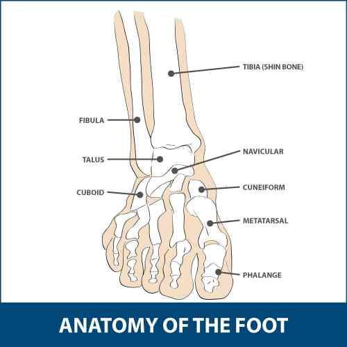 small resolution of the mtp joint is the largest of the two and is found where the first long bone of the foot metatarsal meets the first bone of the toe phalanx