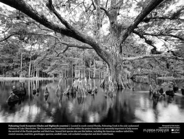 Florida's Fisheating Creek by Clyde Butcher