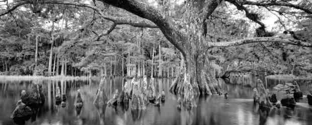 Florida nature photographers: Take a tour via their blogs