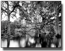 Clyde Butcher photo of Fisheating Creek