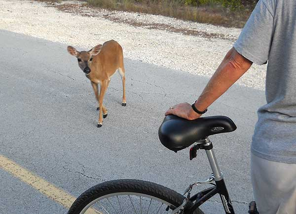 Key deer approach bike, No Name Key, Forida Keys