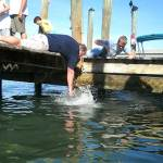 Robbie's Marina: Feed the tarpon; it's best cheap fun you can find in the Keys