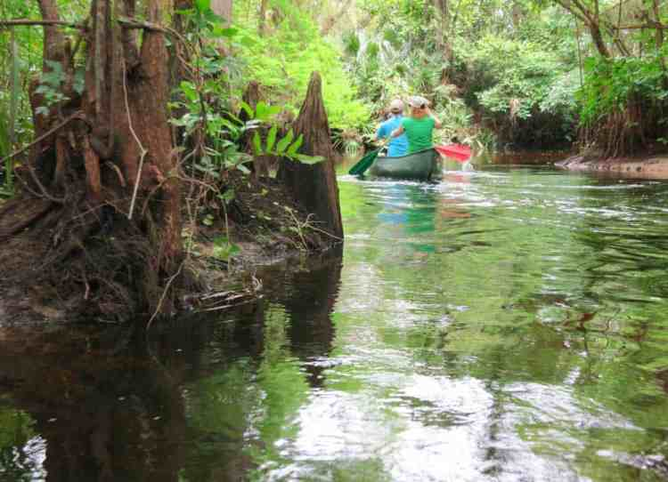 Two weeks after a heavy rain storm, the current was swift along the Loxahatchee River.