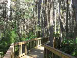 Cypress Swamp Boardwalk