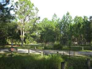 A broader view of a campsite at Moss Park