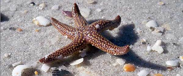 The starfish was one of many treasures found walking the beach.