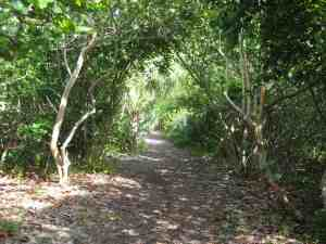 Nature trail behind the dunes at Crandon Park Beach.