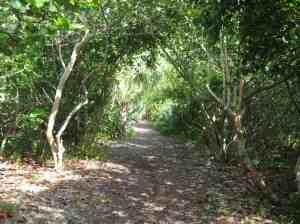 Nature trail behind the dunes at Crandon Park Beach.