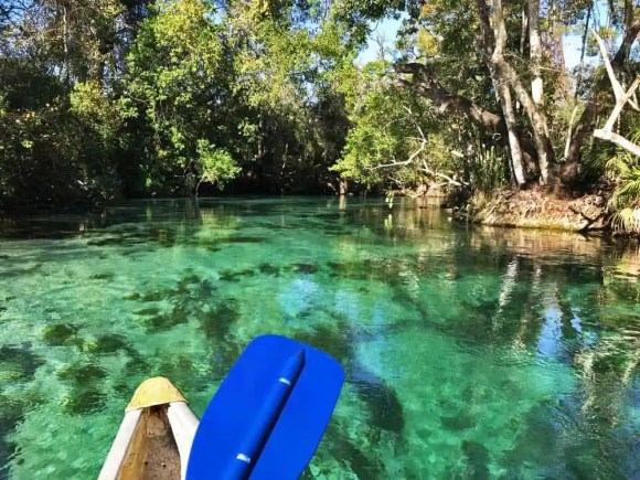Weeki Wachee Spring has such a large flow of crystalline water that it replaces the water in the river every 60 minutes, making the water spectacularly clear and clean. (Photo: Bonnie Gross)