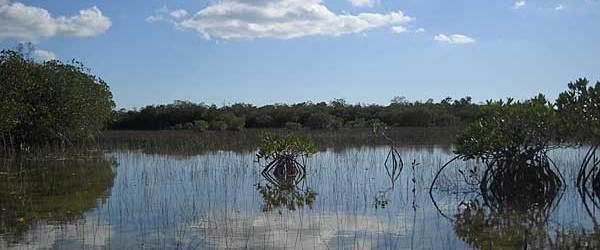 The sky reflected along  Nine Mile Pond canoe trail