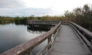 Anhinga Trail at Everglades National Park