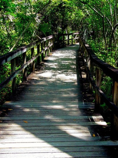 Tamiami Trail Big Cypress Bend Boardwalk by dchriso via flickr