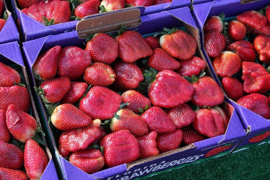 Plant City strawberries