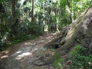 Highland Hammocks Big Oak Trail