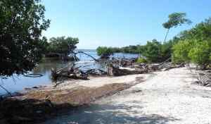 Beach at the end of Long Beach Road on Big Pine Key