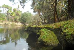 Rocky shore on Peace River, Florida, canoe trip