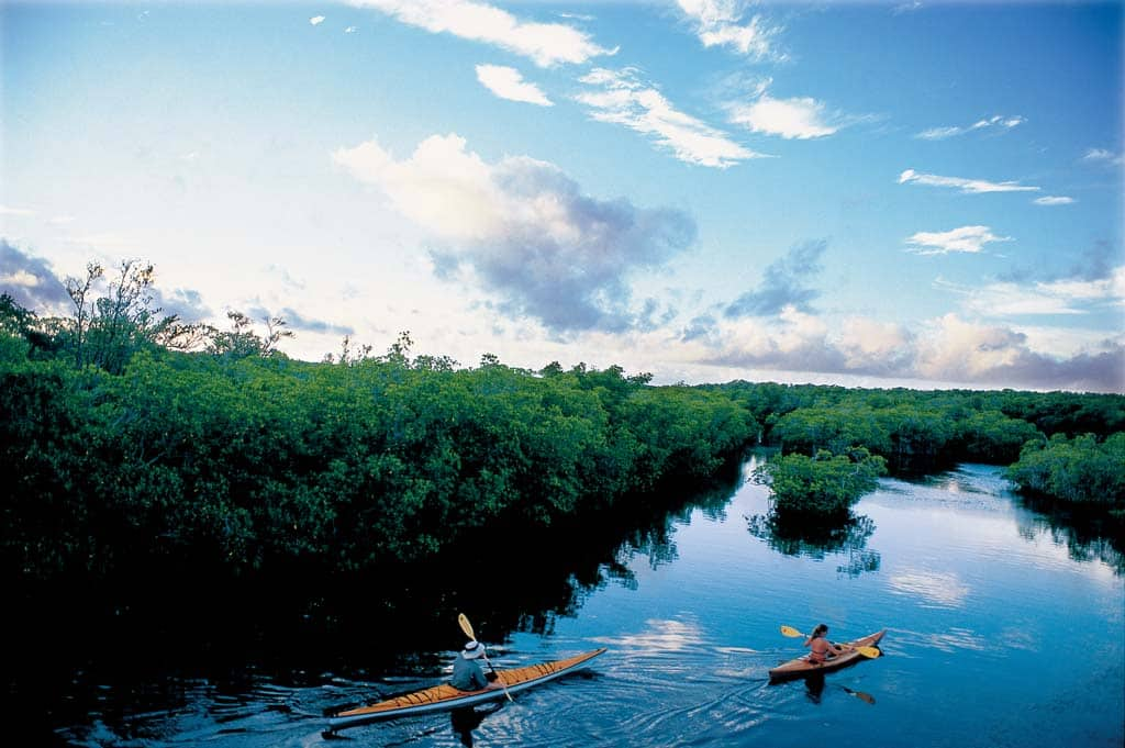 Medium image of kayaking the mangrove trail at curry hammock state park