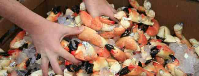 Marathon Seafood Festival: Fresh stone crabs