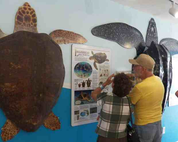 Visitors waiting to tour the Turtle Hospital in Marathon.