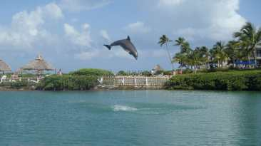 Florida Keys roadtrip and wildlife: Dolphin Research Center in Marathon