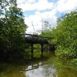 Kayak trail winds under boardwalk's bridge at St. Lucie Inlet Preserve State