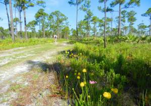 Jonathan Dickinson State Park hiking trail