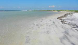 Anclote Key beach near Tarpon Springs