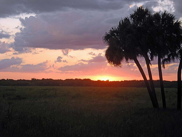 Sunset at Myakka River State Park near Sarasota