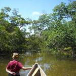 Whiskey Creek at John U. Lloyd State Park is so shallow, you can walk and tow your canoe or kayak,