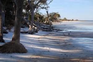 The shoreline along St. Joseph Bay at St. Joseph Peninsula State Park.