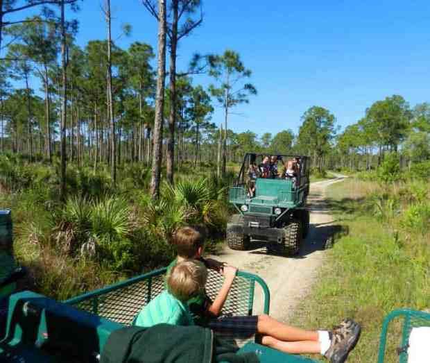 Swamp buggies at Florida Panther Festival 2011